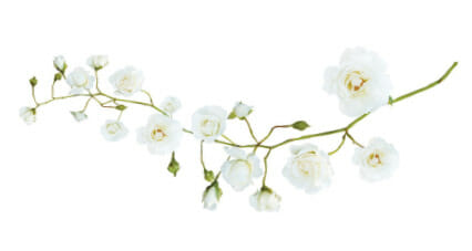 The Homestead Barn Flowers