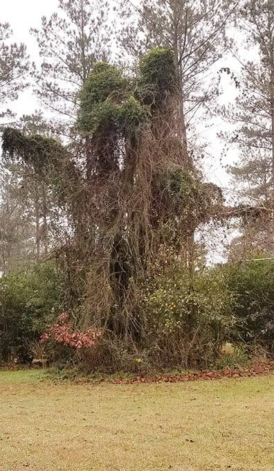 Mark & Sheila's Old Oak Tree